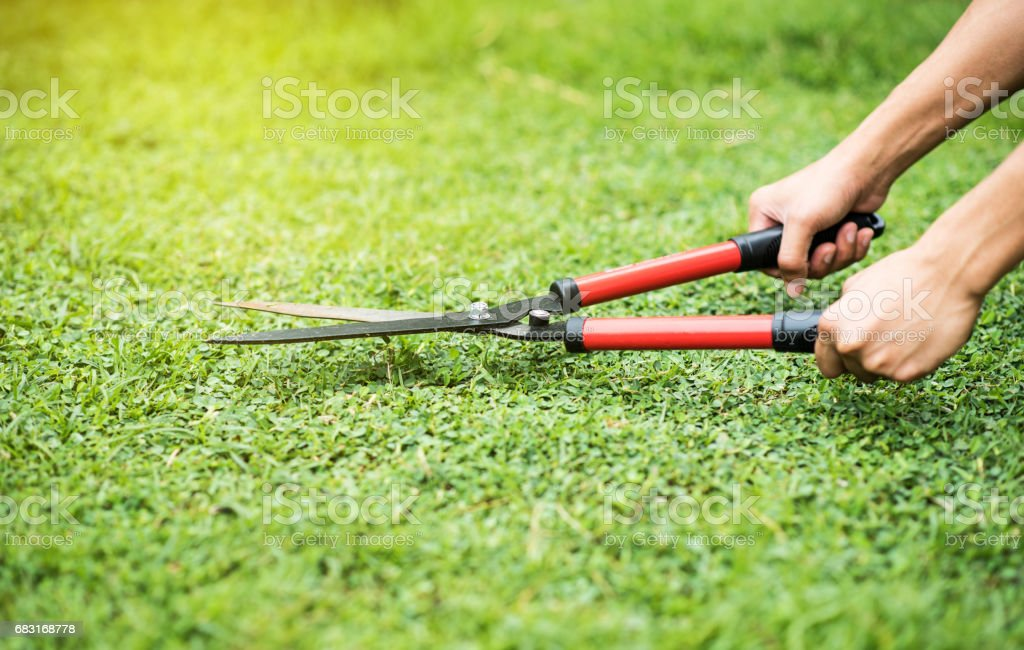 Hands holding scissors and cutting the grass in the garden stock photo