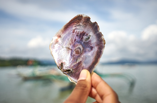 istock Hands holding seashell with beautiful Mother of Pearl 1214433109