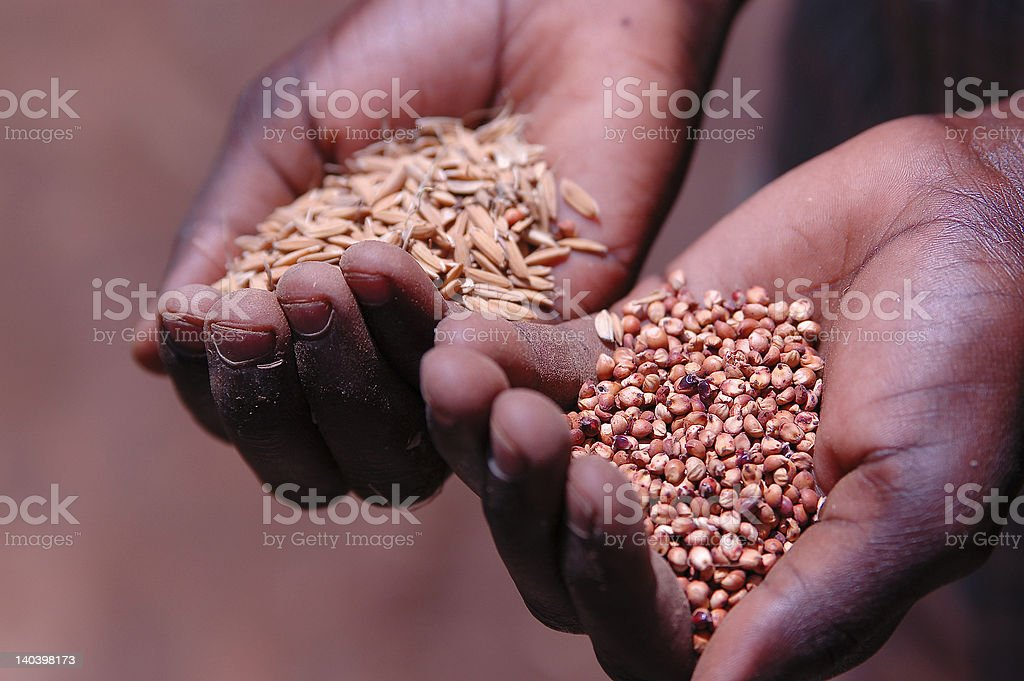 Hands holding seeds 2 stock photo