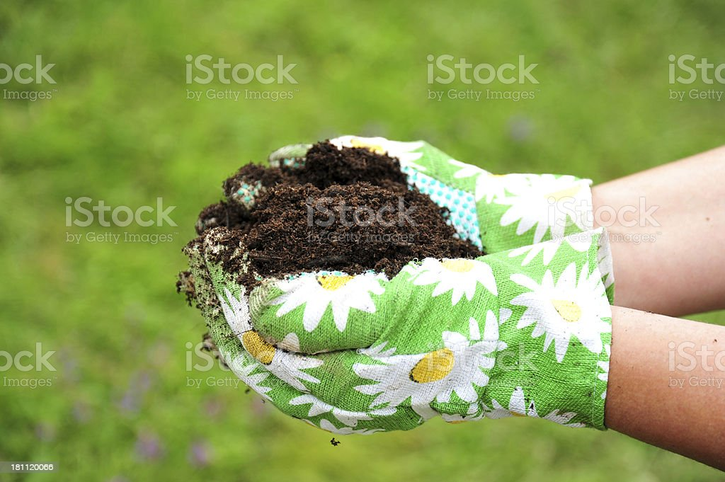 Hands holding soil royalty-free stock photo