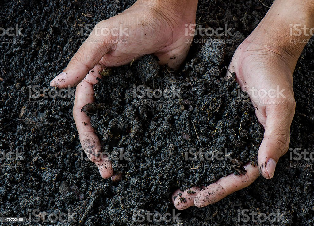 Hands holding soil stock photo