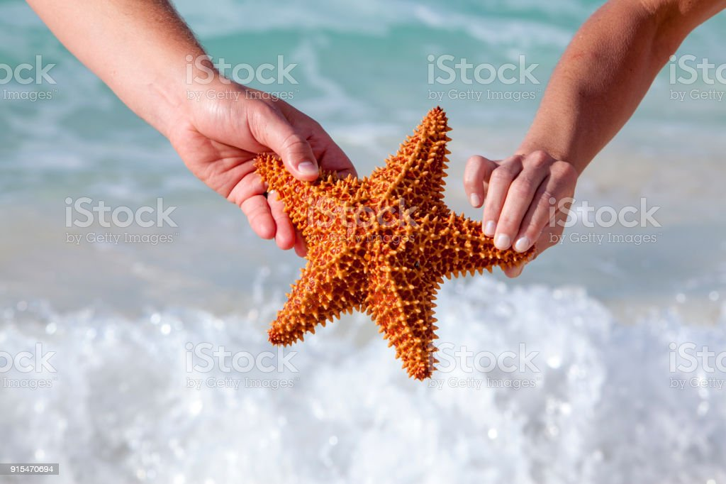 Hands holding starfish by Caribbean Sea stock photo