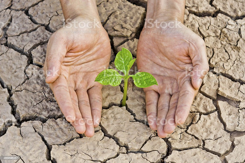 hands holding tree growing on cracked earth royalty-free stock photo