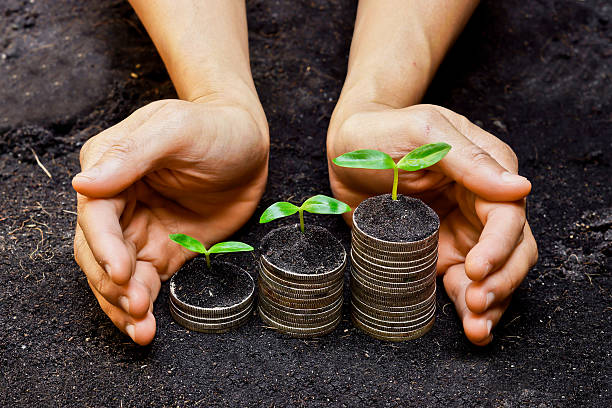 Hands holding trees growing on coins stock photo