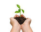 istock Hands holding young green plant isolated on white background 1196167730