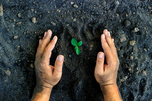 hands holding young plant. Ecology concept stock photo