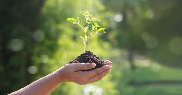 hands holding young plants sprouting and growing on green nature background, earth day, new life growth ecology and business financial progress concept. - earth day stock pictures, royalty-free photos & images