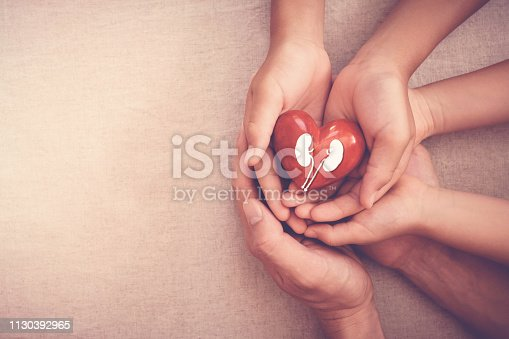 istock hands holiding red heart with kidney, world kidney day 1130392965