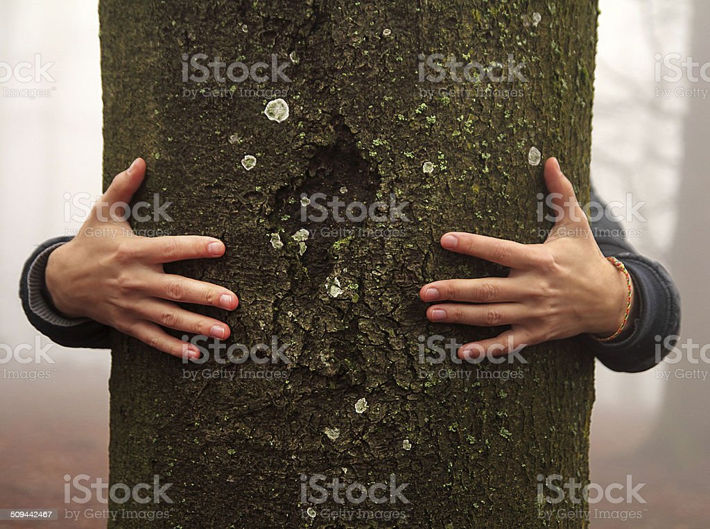 Hände umarmen tree – Foto