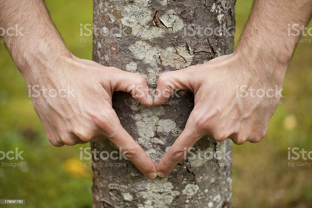 Hands in heart shape on a tree trunk. royalty-free stock photo