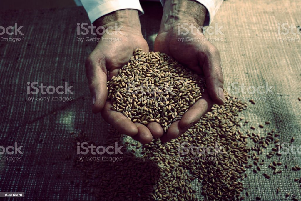Hands Of A Baker Holding Seeds royalty-free stock photo