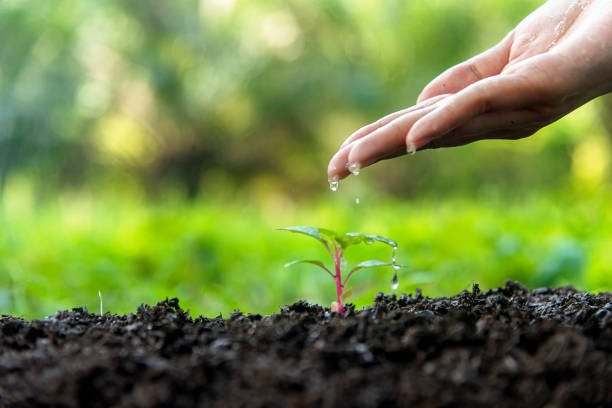 hände eines gärtners dauernd wasser in die jungen grünen pflanzen im naturpark für verringern globale erwärmung der erde. ökologie-konzept - wachstumstabelle baby stock-fotos und bilder