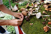 hands of a man placing mushrooms on improvised grass on exhibition of  mushrooms on sunny day, outdoor