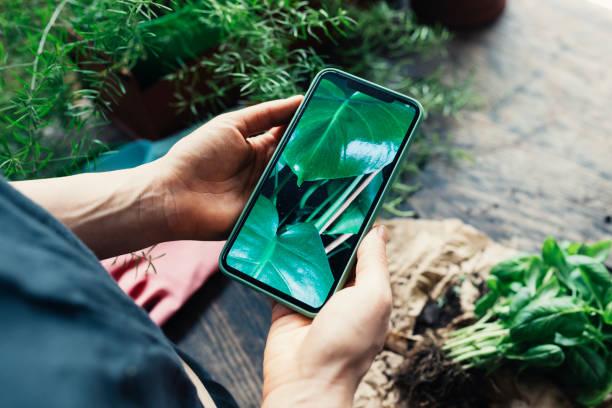 tomando una foto de sus plantas de la casa con un teléfono movil foto planta fotografías