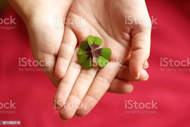 Hands of a woman with a fourleafed clover picture id901580518?b=1&k=6&m=901580518&s=612x612&h=gr6p 5ad1wz7cx6vnve3zkj7ydmeh3twbh 7ufruwg0=