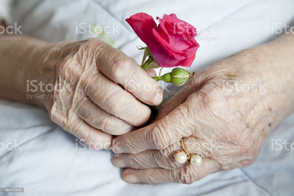 Hands of elderly lady with rose royalty-free stock photo