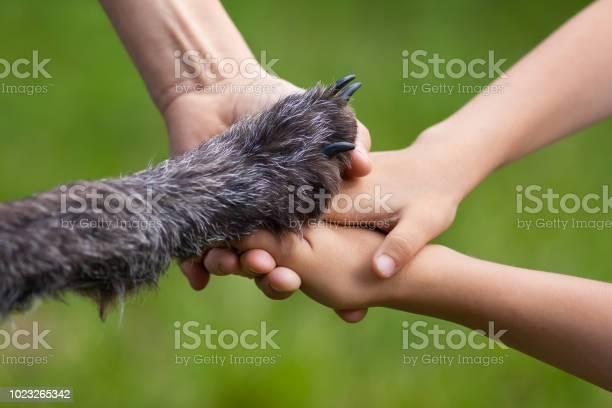Hands of family and paw of dog picture id1023265342?b=1&k=6&m=1023265342&s=612x612&h=8pir6vj8ie31jkr rnkv3vb8wja6954mvigkqc12pfa=