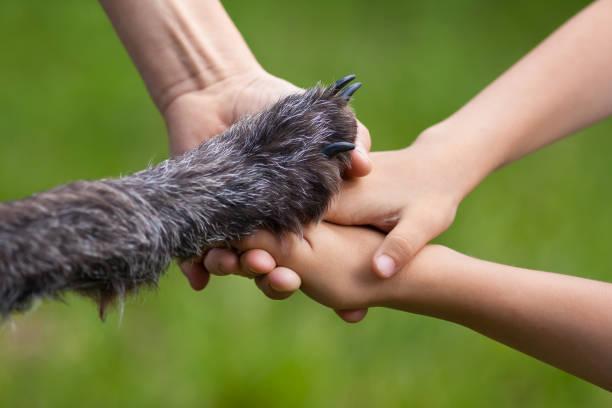 aile ve köpek pençe elinde - pati stok fotoğraflar ve resimler