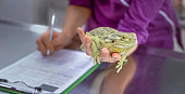 Female veterinarian holding bearded dragon in her hand while making notes about health exam with other hand.