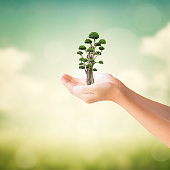 Hands of little girl holding bonsai tree with natural summer background
