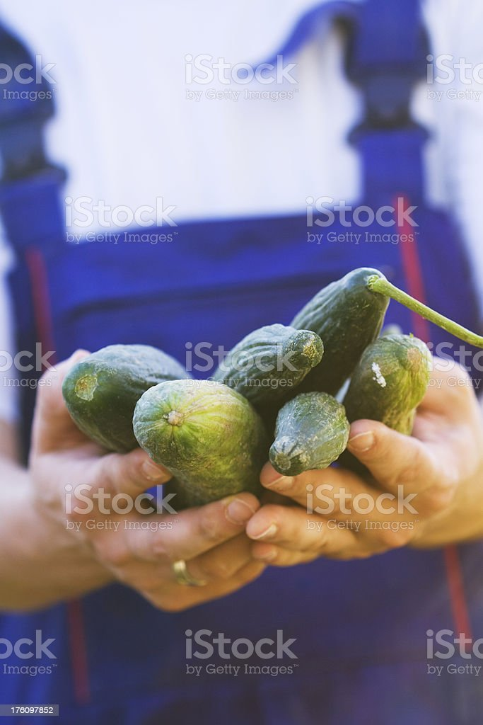 hands of man holding cucumber royalty-free stock photo