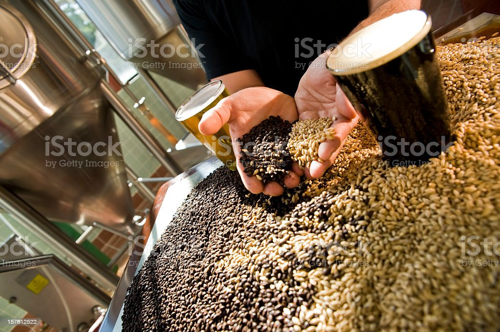 Hands of master brewer holding light dark malts in micro-brewery stock photo