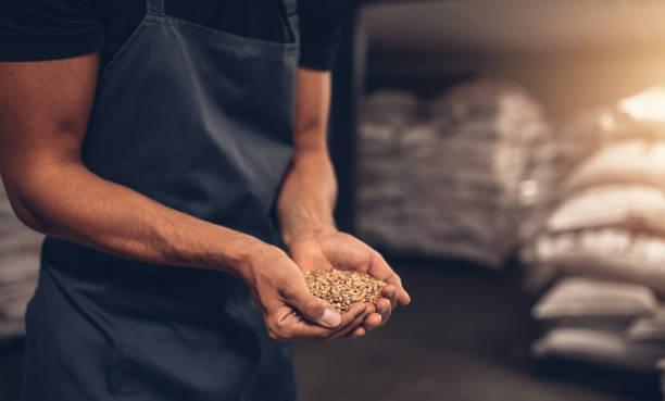 handen van meesterbrouwer met gerst zaden - hand constructing industry stockfoto's en -beelden