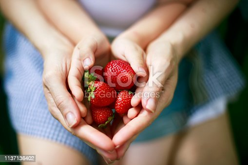 Hands of mother and child holding strawberries. Concept of homegrown produce and healthy eating.
