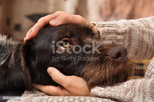 istock hands of owner petting a dog 938501236