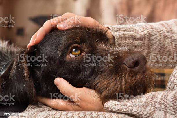 Hands of owner petting a dog picture id938501236?b=1&k=6&m=938501236&s=612x612&h=rgzfvtmzhorgamp72vqgyumtnz4q1 2vizay f3bes8=