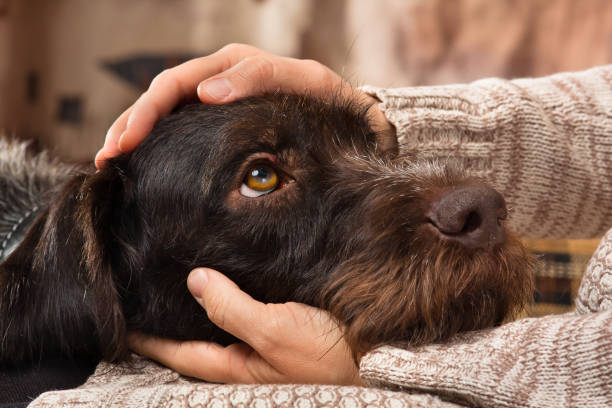 hands of owner petting a dog - stroking stock pictures, royalty-free photos & images