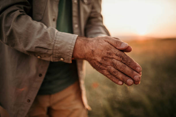 Hands of the farmer Photo of hands of the farmer farm worker stock pictures, royalty-free photos & images