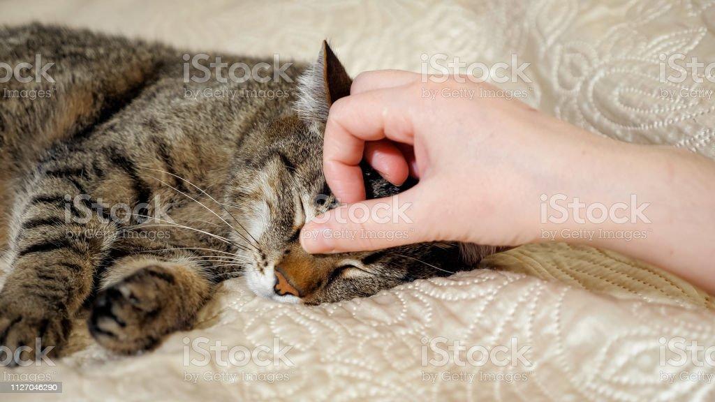 Händen der Mädchen spielt mit schlafen süße Tabby Katze – Foto