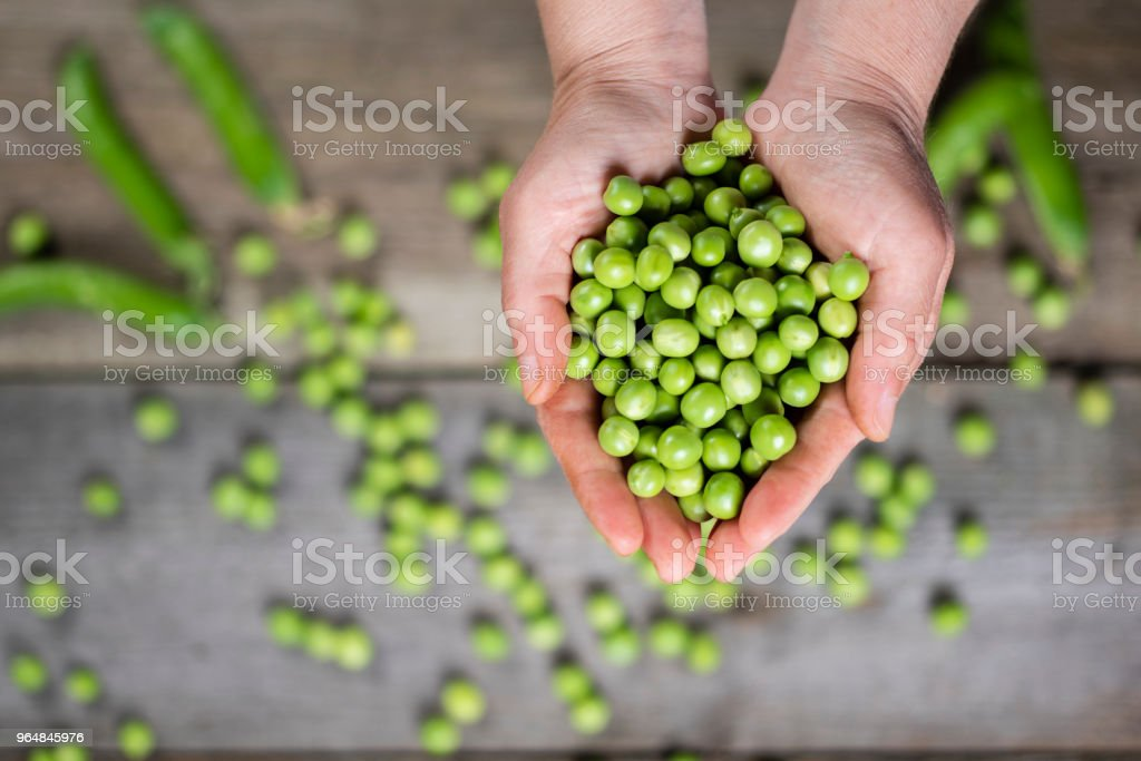 hands of the peas royalty-free stock photo