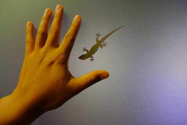 las manos sobre el vidrio y la sombra de lagarto - numero 51 fotografías e imágenes de stock