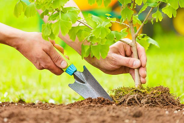 hands planting small tree with roots - herbebossing stockfoto's en -beelden