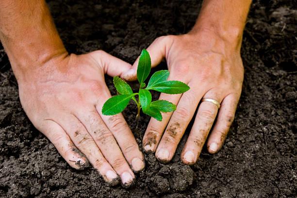 hände pflanzen sprout - eheringe öko stock-fotos und bilder