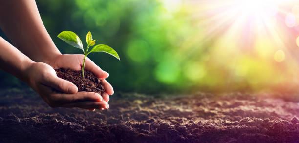손을 땅에 묘 목 심기 - 지속가능한 생활양식 뉴스 사진 이미지