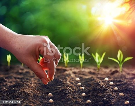 Hands Planting The Seedlings Into The Ground