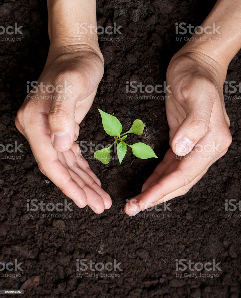 Hands protecting tree growing royalty-free stock photo