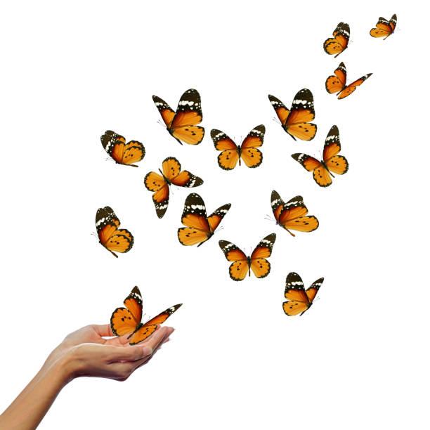Hands releasing butterflies picture id1195499748?b=1&k=6&m=1195499748&s=612x612&w=0&h=j0fm5ud1eps6abemat0k ybxid5f13slalvr0xraoh4=
