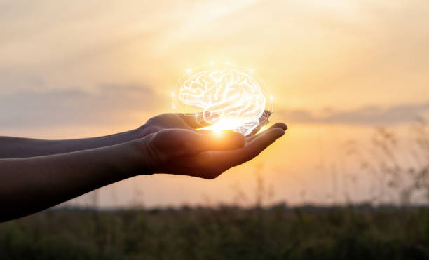Hands support the brain in the sun . stock photo