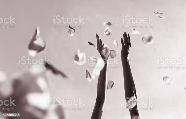 Hands throwing rose pedals picture id493586346?b=1&k=6&m=493586346&s=612x612&h=rehslozxjwg7qvn6ib9fwq030jwztd1lrwroztuf2ws=