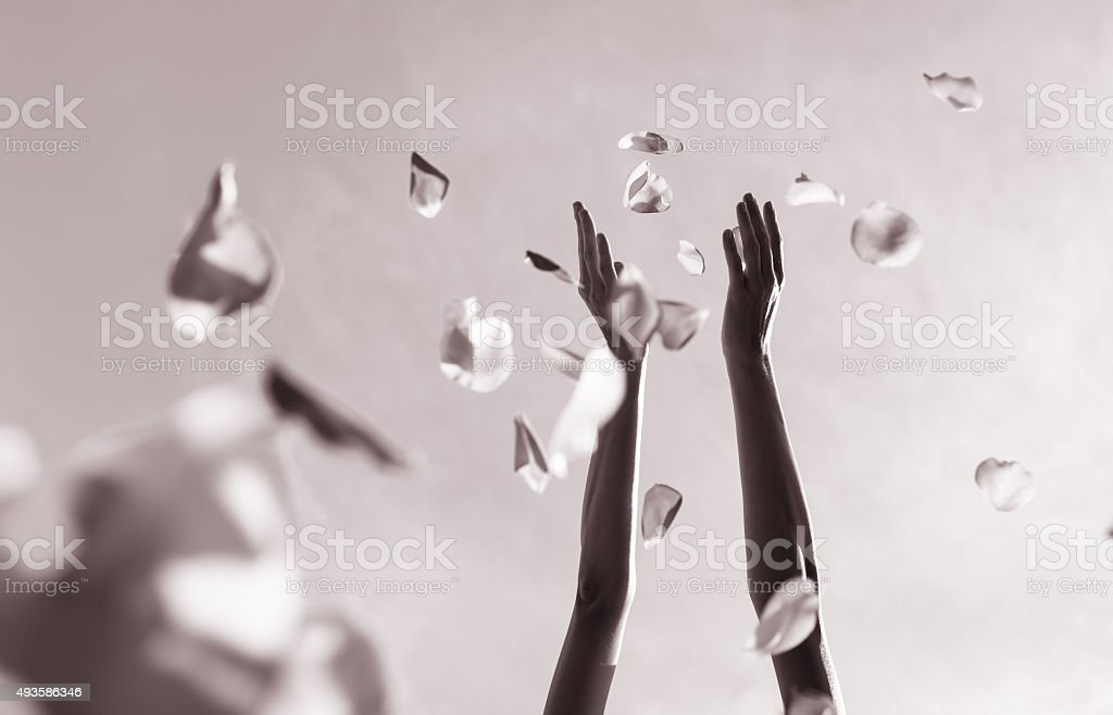 Hands throwing rose pedals. stock photo