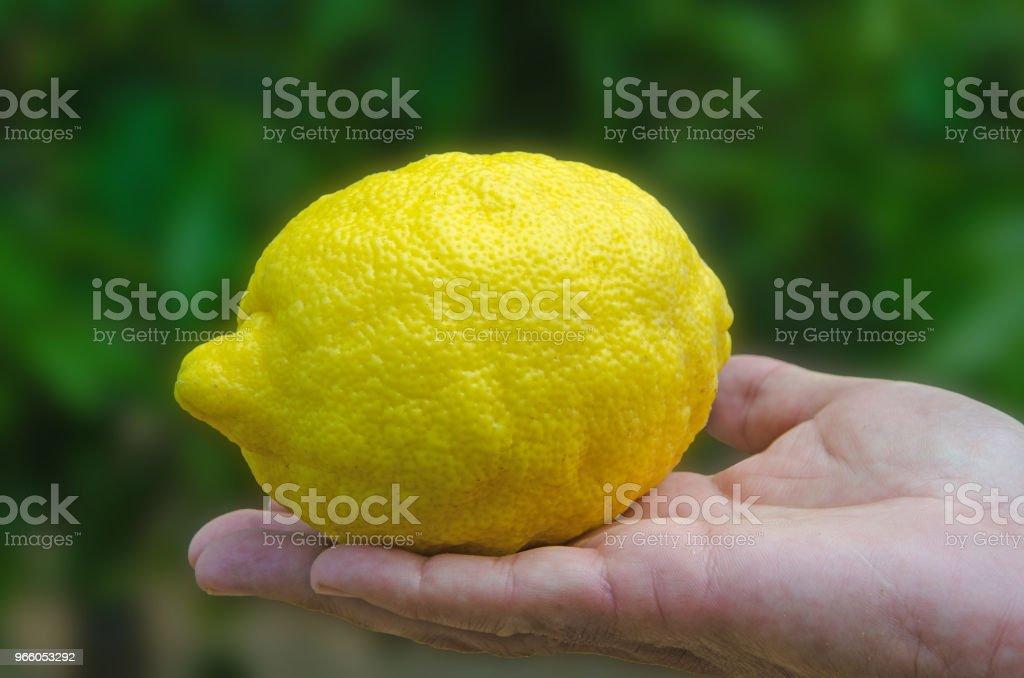 Händer med en citron isolerad på vit bakgrund - Royaltyfri Citrusfrukt Bildbanksbilder