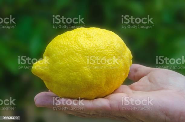 Händer Med En Citron Isolerad På Vit Bakgrund-foton och fler bilder på Citrusfrukt
