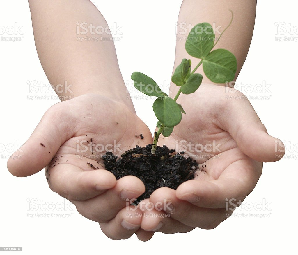 Hands with a small plant royalty-free stock photo