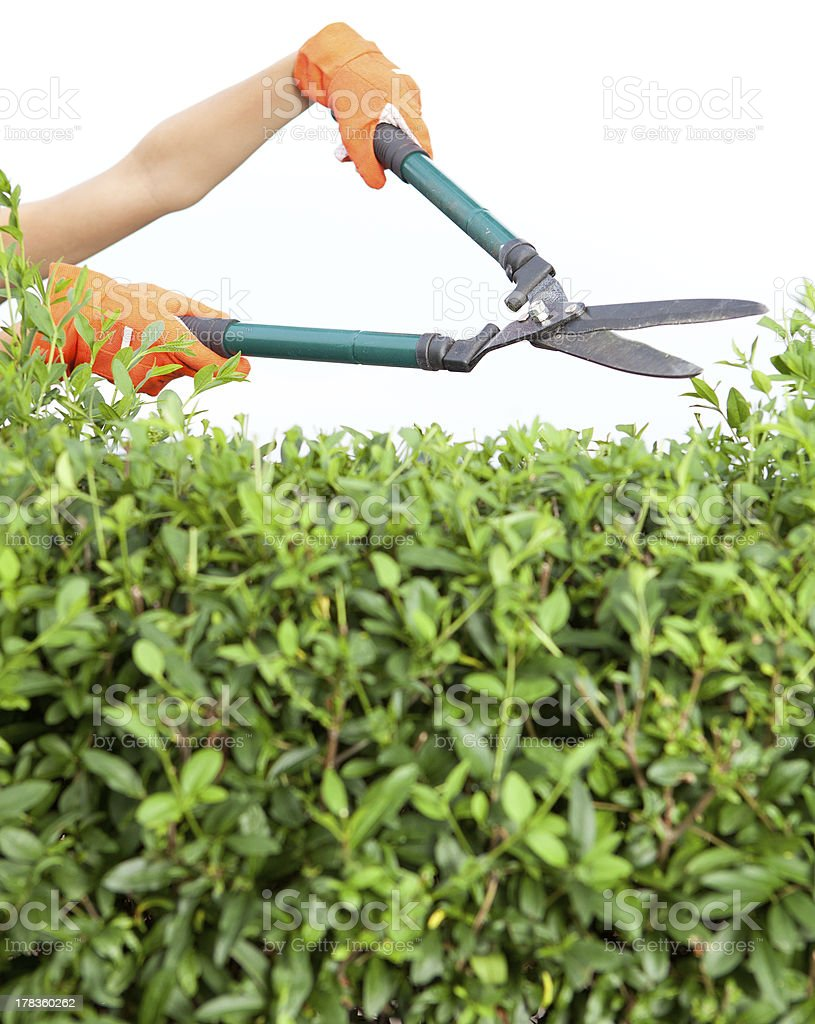 Hands with garden shears stock photo