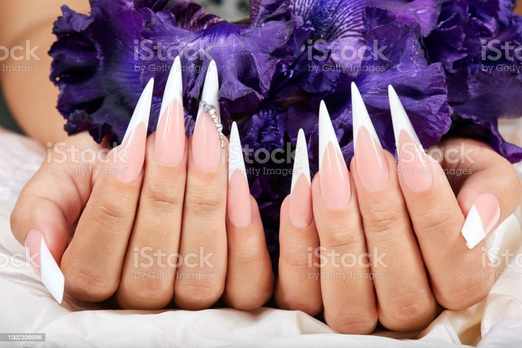 Hands with long artificial french manicured nails and a purple Iris...