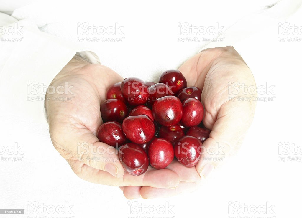Handsful of Cherries royalty-free stock photo
